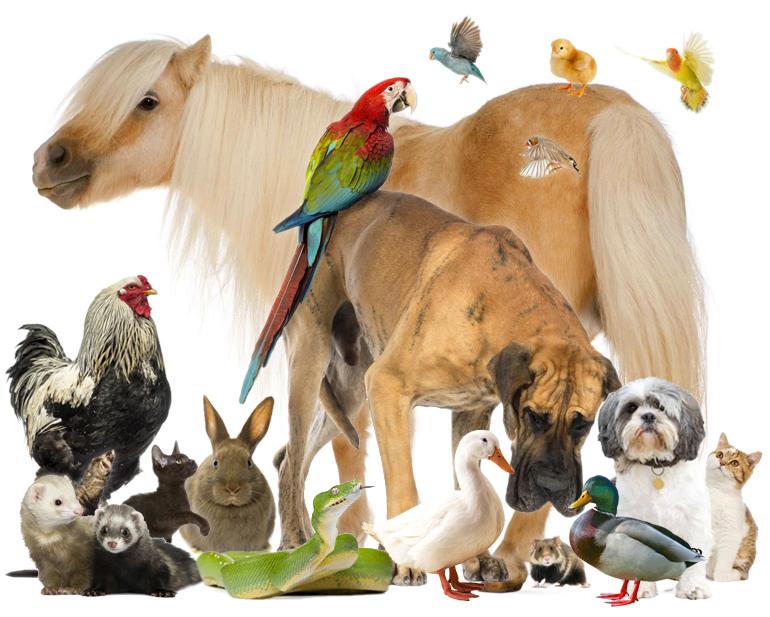 Matrimonio Tra Uomo E Animale : Zooantropologia il rapporto tra uomo e animale esotika
